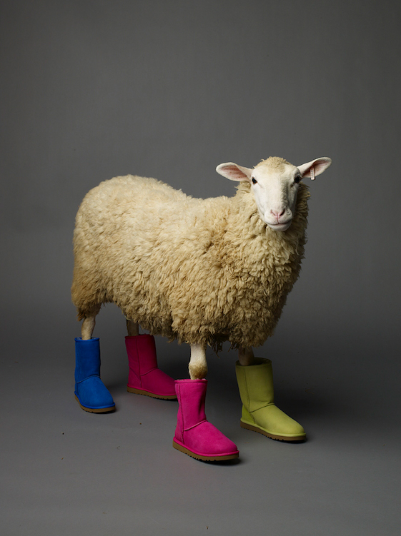 Sheep in Uggs